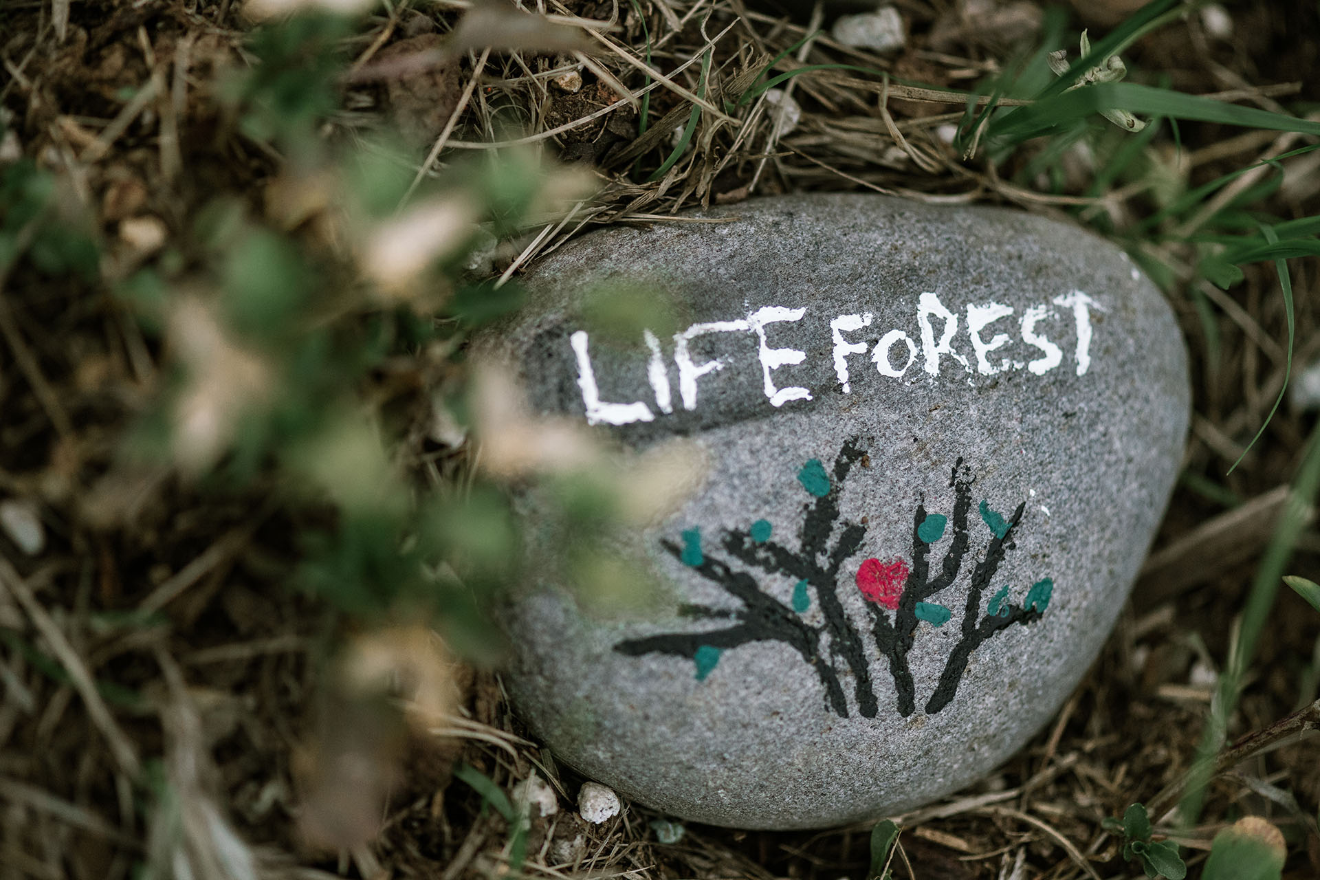 Photo of a rock with Life Forest painted on it.